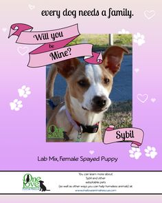 Give your heart to Sybil this valentines day! This girl is looking for her forever home, just in time for the holiday of hearts!