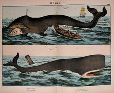 Natural history of the animal kingdom for the use of young people : - Biodiversity Heritage Library. http://biodiversitylibrary.org/page/28687276. #WorldOceansDay