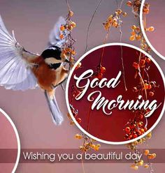 Best Beautiful Good Morning Images Best Collection Only Good Morning Images Beautiful Good Morning Wishes, Cute Good Morning Images, Latest Good Morning Images, Good Morning Images Flowers, Good Morning Picture, Good Morning Love, Morning Pictures, Good Morning Quotes, Evening Greetings