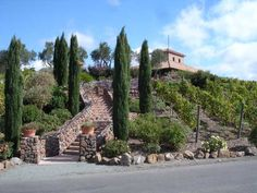 Viansa Winery Sonoma CA