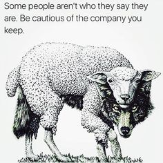"""What... Did you think we were born yesterday. You know how many wolves, sharks and hyenas I had to deal with. Trust your intuition it's a God-given gift. Never allow someone to prove you right twice. """"The reason I win & you don't is because I'm me while you pretend to be someone else"""" - @timkarsliyev"""