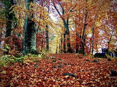 Herbst am Starnberger See. König-Ludwig-Weg von Leoni nach Berg