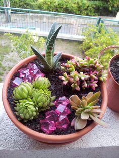 Marvelous succulent arrangements