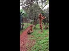 This Video Of A Tiger Jumping In Slow Motion Will Blow Your Mind