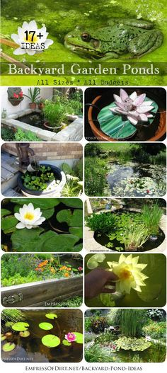 Would you love birds, bees, and butterflies to call your garden party central? Add a #backyard pond! From small containers to large inground pond with waterfalls, these ideas will get you started http://empressofdirt.net/backyard-pond-ideas/
