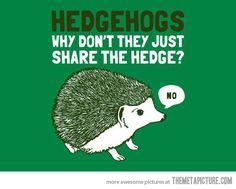 Hedgehogs…