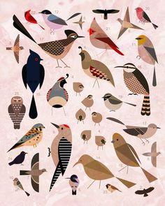 Birds of the Sonoran Desert Canvas Print