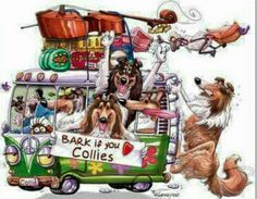 VW Bus full of Collies
