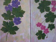 Garden Geraniums Purple