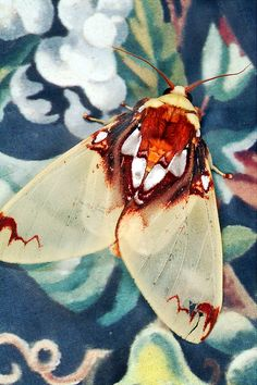 The World's Most Stunning Moths Will Set Your Heart Aflutter - - Most people want moths to go away. Emmet Gowin wants to photograph them. Cool Insects, Bugs And Insects, Flying Insects, Beautiful Bugs, Beautiful Butterflies, Papillon Butterfly, Monarch Butterfly, Butterfly Dragon, Animals And Pets