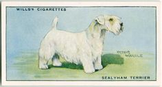 Dogs Sealyham Terrier, Dog Artwork, Collector Cards, New York Public Library, Old Postcards, Gods Love, Art Drawings, Vintage Illustrations, Dogs