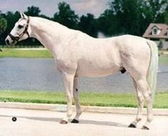 Silver Buck, sire of Silver Charm, winner of the 1997 Kentucky Derby.