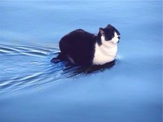 Holy Cat - like Jesus, but not quite. Walks on water but flatly refuses to ride a donkey, happily gives the crowd the loaves, but keeps all the fishes.