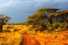 Savane - #AfriqueDuSud #Savane