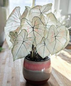 27 Indoor Plants According to Color Psychology & How They Affect You House Plants Decor, Garden Plants, Bamboo Garden, Cactus Decor, Cactus Art, Nature Plants, Succulents Garden, Herb Garden, Garden Art