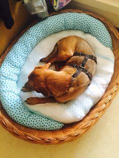 Hundekissen - Korbis Kreatives Stübchen - Hundekissen, Hundebett, Kissen, Bett, Hund, dog, sewing, nähen