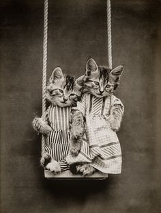 Swinging with Cats, photographed by Harry Whittier Frees, June 24, 1914. Photograph shows two kittens wearing clothes on a swing.