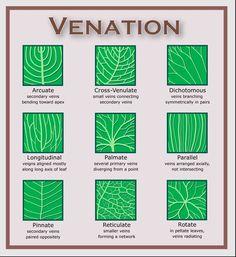 Leaf Diagrams