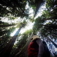 Walk among 1000-year old giants in Whistler's Ancient Cedars trail.   Photo by @artemisiamartin via Instagram #explorebc #explorecanada