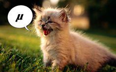The noise a cat makes | #funny #math #joke