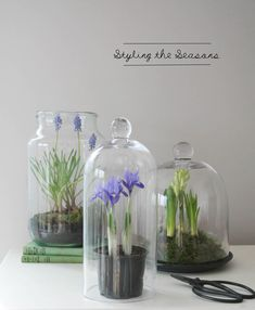 Styling the Seasons – March Mason Jar Crafts, Mason Jars, Kitchen Doors, Kitchen Cabinets, Spring Bulbs, Spring Theme, Planting Bulbs, Easter Table, Table Centerpieces