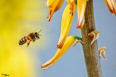 Teresa Fndz Photography: Á procura do mel