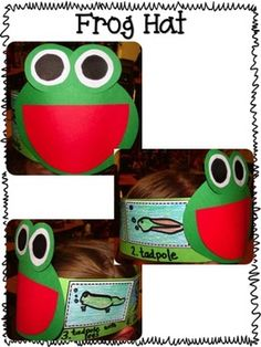 Frogs life cycle activity