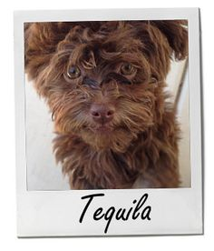 Have you met Tequila? She's our Pet of the Week! #POTW