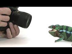 Você já pensou em ser um fotógrafo da vida animal? Adora bater fotos dos seus animais de estimação e dos que aparecem em seu quintal? É, mas bater foto de um cachorro ou de uma joaninha parece ser ...