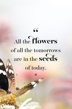 Flower Qoutes, Flower Quotes Love, Love Quotes, Happy Pictures, Love Pictures, Fresh Quotes, Spring Quotes, Quote Board, Water Flowers