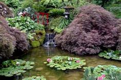 The Japanese Garden ~ Butchart Gardens in Canada