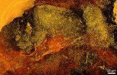 World's Oldest Red Algae Fossils Found