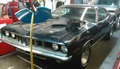 This is a nice mirror, #industrialcat #workinganimals #cats #cars 1971 barracuda + feral cat