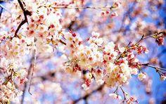 Selingkaran.com - Bunga Merupakan tumbuhan dengan berbagai corak yang berbeda beda, dan tentu jyga dengan warna yang berbeda beda pula, warna yang dihasilkan oleh bunga sangat banyak sekali dari mulai warna merah, hijau, kuning dan masih banyak yang lainnya lagi,…