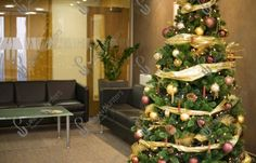 Large Indoor & Outdoor Christmas Tree Hire and Rental Urban Planters, Christmas Trees, Charity, Holiday Decor, Plants, Home Decor, Xmas Trees, Decoration Home, Room Decor