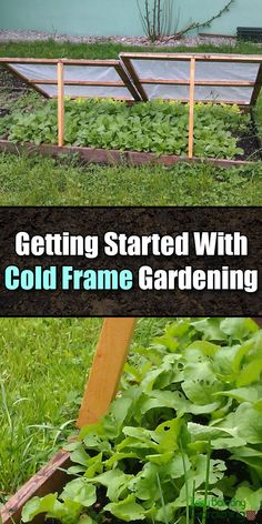 Grow Fresh Vegetables All Year Round With Cold Frame Gardening - Easy Balcony Gardening Cold Frame Gardening, Organic Gardening, Balcony Gardening, Urban Gardening, Planting Vegetables, Growing Vegetables, Fresh Vegetables, Vegetable Gardening, Gardening For Beginners