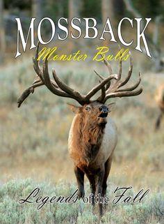 Bc record book mule deer