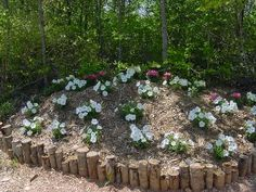 Wood used as edgers for flowerbeds