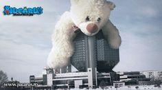 Invazia ursilor giganti a inceput: www.jucarus.ro/produse/jucarii-gigant