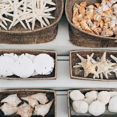 Seashell collection.