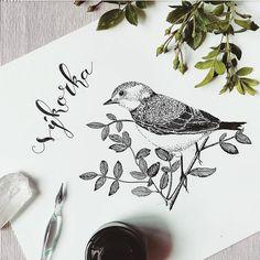 Ptáček. Bird.