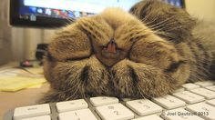 Keyboards Make Willie Very Sleepy...
