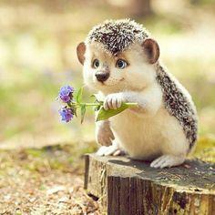Good Morning Handsome, Good Morning Funny, Good Morning Sunshine, Felt Animals, Animals And Pets, Baby Animals, Cute Animals, Morning Pictures, Good Morning Images