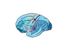 IBM RESEARCH THINKS IT'S SOLVED WHY THE BRAIN USES SO MUCH ENERGY IT'S EXPLORING ITSELF