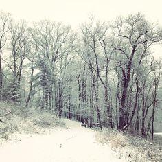 Snowy Sunday Stroll.