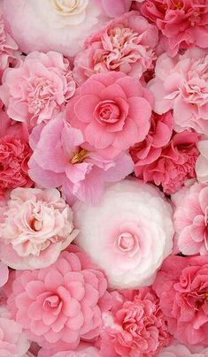 Beautiful Flowers Camellia - Kamelie Need a girly floral iPhone Case cover, check out www. Amazing Flowers, Pretty In Pink, Pink Flowers, Beautiful Flowers, Paper Flowers, House Beautiful, Pink Peonies, Pink Petals, Beautiful Beautiful