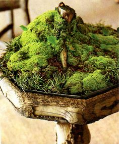planter moss garden