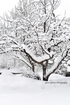 Winter Picture Snow Photo Fine Art by GwenGibsonPhotograph on Etsy