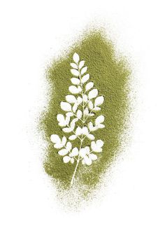 The next superfood is here and it's called moringa - Yahoo!