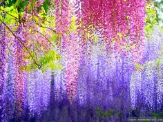 Colorful Flower Wallpapers 30 84836 Images HD Wallpapers  wallfoy.